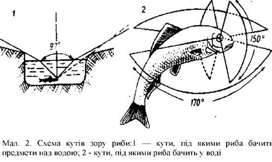Решту предметів риби бачать у