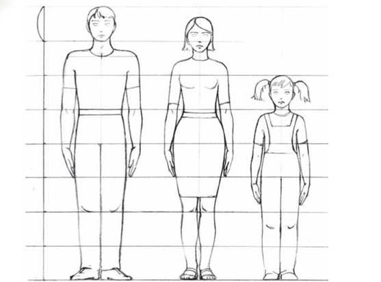 Пропорции частей тела человека