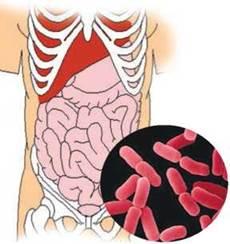 фото бактерий в кишечнике человека