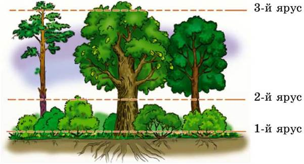 Результат пошуку зображень за запитом яруси лісу